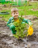 Boy watering the planted tree Stock Photos