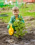 Boy watering the planted tree stock photo