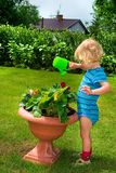 Boy Watering The Garden Stock Photography