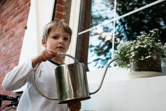 Boy watering white flower in a pot on the windowsill Stock Photography