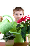 Boy waters flowers from a watering can Stock Image