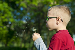 Boy wearing glasses blowing a dandelion royalty free stock photos