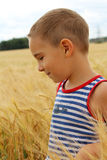 Boy in a wheat field Stock Photography