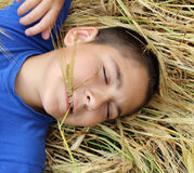 Boy in the wheat Stock Photo