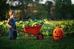 Boy with wheelbarrow of gourds. Toddler boy smiling proud at his wheelbarrow full of gourds Stock Photo