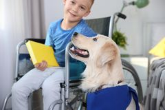 Boy in wheelchair reading book with service dog. By his side indoors Royalty Free Stock Photography