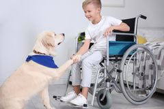 Boy in wheelchair with service dog. Indoors royalty free stock photos
