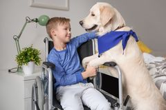 Boy in wheelchair with service dog. Indoors Royalty Free Stock Images