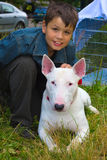 Boy and white Bull Terrier Dog breed Stock Photos