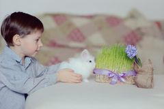A boy and a white rabbit Royalty Free Stock Photos