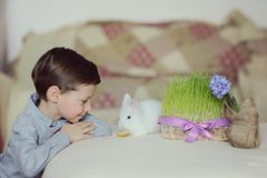 A boy and a white rabbit Royalty Free Stock Images