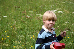 Boy in wildflowers. Young boy in a field of wildflowers royalty free stock image