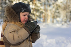 Boy in the winter wood Stock Photos