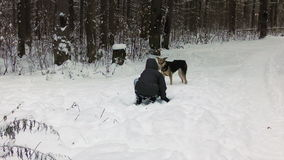 Boy in the winter woods playing with a dog stock video footage