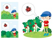 Boy With A Magnified Glass Looking At A Lady Bug Stock Photography
