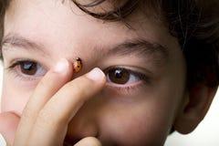 Boy With Ladybug Royalty Free Stock Photos