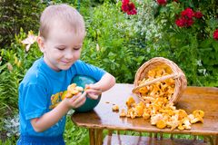 Boy With Mushrooms Stock Image