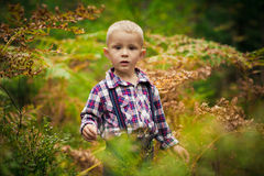 The boy in the woods Stock Images