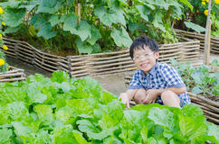 Boy working in farm Royalty Free Stock Image