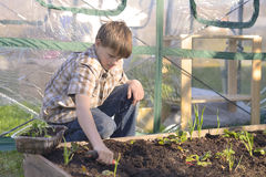 Boy Working in a Garden Stock Photos