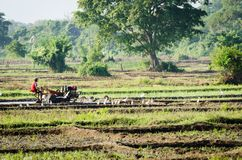 Boy working with a motor plow in rice fields Royalty Free Stock Photography