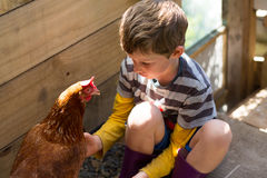 Boy (7 years) dressed in stripy shirt and gumboots pats chicken,. Boy (7 years) looking thoughtful, dressed in stripy shirt and gumboots pats chicken, in dappled Royalty Free Stock Photo