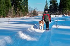 Boy 10 years old walks with dog. Child walks along snow-covered road with red Siberian husky on background forest and blue sky. stock photography