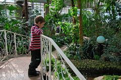 Boy 6-8 years stands on the bridge over the pond in the tropical greenhouse Botanical garden. royalty free stock photo