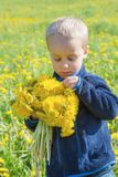 Boy yellow dandelions. stock photos