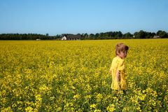 Boy in yellow field Royalty Free Stock Image