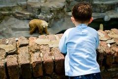 Boy at the Zoo. Boy looking at zoo bear Stock Image