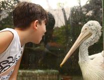 Boy in zoo admire pelican bird close up summer outdoor photo. Teen boy in zoo admire pelican bird close up summer outdoor photo Stock Images
