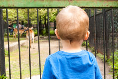 Boy in the zoo Royalty Free Stock Image