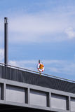 Boya de vida en un puente Imagen de archivo