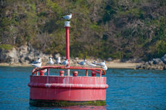 Boya marítima roja de la etiqueta de plástico Foto de archivo libre de regalías