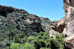 Boyce汤普森树木园国家公园,优胜者,亚利桑那美国 免版税库存图片