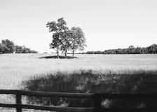 Boyce,黑白的弗吉尼亚- 库存图片