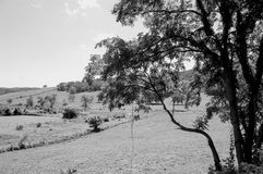 Boyce, la Virginia - in bianco e nero fotografia stock libera da diritti