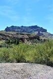 Boyce Thompson Arboretum State Park överman, Arizona Förenta staterna Royaltyfri Bild