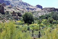 Boyce Thompson Arboretum State Park överman, Arizona Förenta staterna Fotografering för Bildbyråer