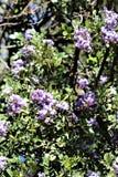Boyce Thompson Arboretum State Park, superior, Arizona Estados Unidos Fotografía de archivo libre de regalías
