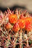 Boyce Thompson Arboretum State Park, superior, Arizona Estados Unidos Imagen de archivo