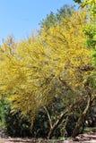 Boyce Thompson Arboretum State Park, superior, Arizona Estados Unidos Imagen de archivo libre de regalías