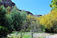 Boyce Thompson Arboretum State Park, superior, Arizona Estados Unidos Foto de archivo