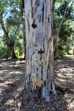 Boyce Thompson Arboretum State Park, superior, Arizona Estados Unidos Imagenes de archivo
