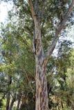 Boyce Thompson Arboretum State Park, superior, Arizona Estados Unidos Fotos de archivo libres de regalías