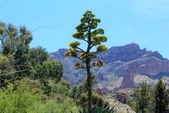 Boyce Thompson Arboretum State Park, superior, Arizona Estados Unidos Imágenes de archivo libres de regalías