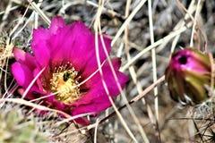 Boyce Thompson Arboretum State Park, superior, Estados Unidos do Arizona Imagem de Stock Royalty Free