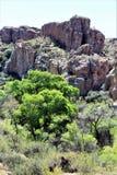 Boyce Thompson Arboretum State Park, superior, Estados Unidos do Arizona Foto de Stock Royalty Free