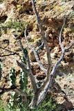 Boyce Thompson Arboretum State Park, superiore, Arizona Stati Uniti immagini stock